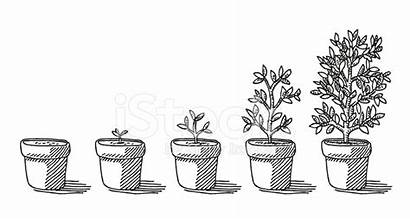 Plant Growing Potted Drawing Pot Sketch Gibberellin