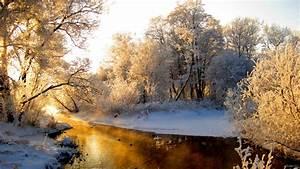 Sun in the winter forest HD Desktop Wallpaper | HD Desktop ...