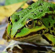 Frosch Als Haustier : terrarium tiere welches ist das richtige ~ Buech-reservation.com Haus und Dekorationen