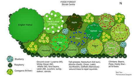 slovak centre food forest design urban food forestry