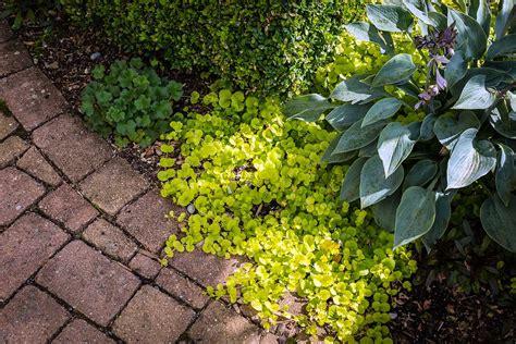 Schattige Ecken Im Garten Gestalten. Garten Planen