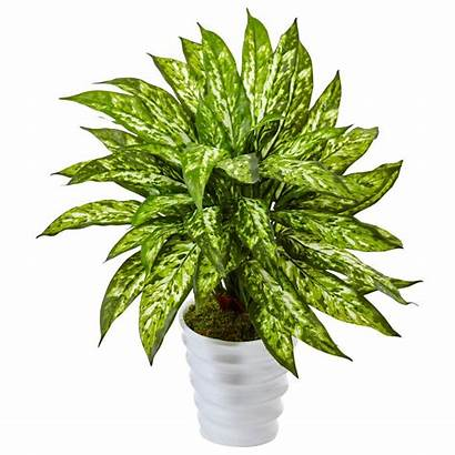 Artificial Aglaonema Natural Swirl Nearly Plants Indoor