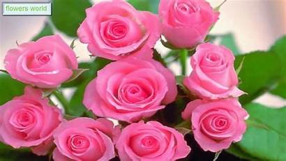 Roses Pink Bright