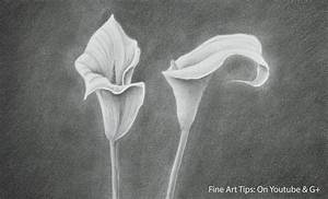 How to Draw a Calla Lily - How to Draw Flowers - YouTube
