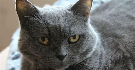gatti da adottare verbania