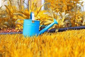 Muss Der Rasen Nach Dem Düngen Gewässert Werden : 10 tipps f r einen tollen rasen willkommen in franks kleinem garten ~ Yasmunasinghe.com Haus und Dekorationen
