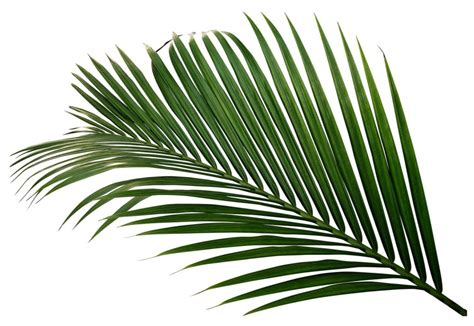 foto palme shop palmen als symbol f 252 r gl 252 ck panorama badische zeitung