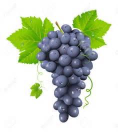 le grappe de raisin grappe sur topsy fr