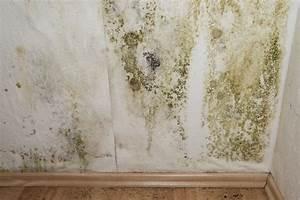 peinture anti moisissure son prix comment la choisir et With probleme moisissure mur chambre