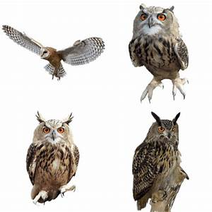 Owls transparent PNG images - StickPNG