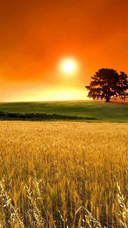 Sunny Days Summer Mobile Wheat Sunset Field