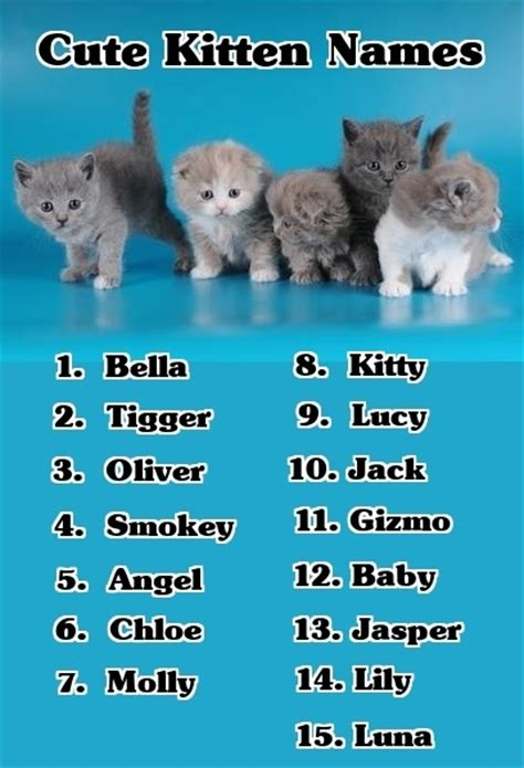 kitten names if you re looking for cute kitten names here s a list of the top 15 for 2012 cute kitten