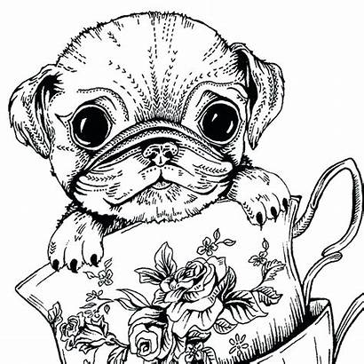 Coloring Pages Dog Adults Pug Printable Dogs