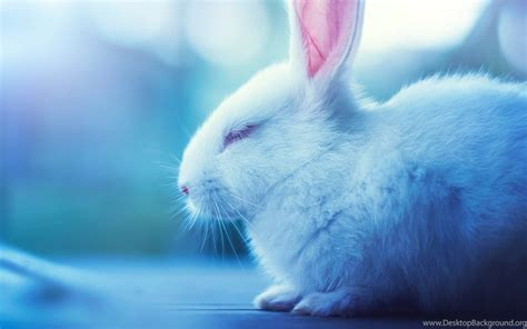 cute bunny wallpapers   cute rabbit wallpapers