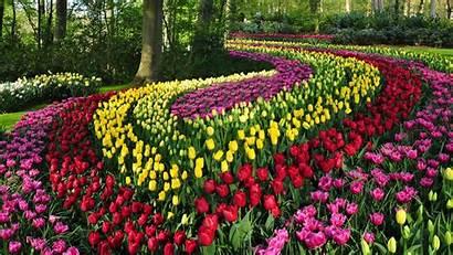 Garden Tulips Virtual Tour Keukenhof Dutch Blooming