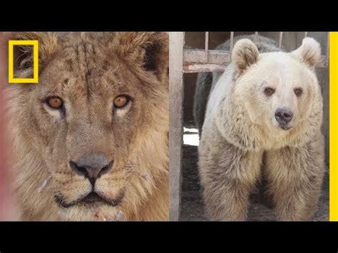 Wartorn Zoo's Last Surviving Animals Rescued In Mosul