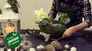 Amaryllis In Wachs Selber Machen : stilvolle adventsdeko mit amaryllis selber machen youtube ~ Orissabook.com Haus und Dekorationen