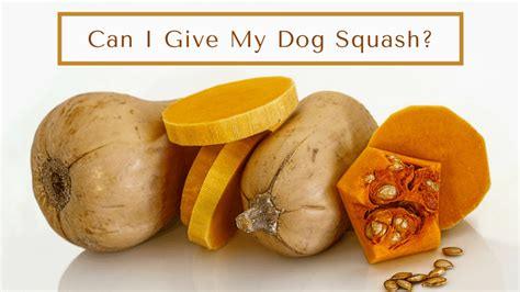can dogs eat squash can dogs eat squash smart dog owners