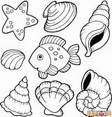 Coloring Shells Pages Beach Printable Sea Popular sketch template