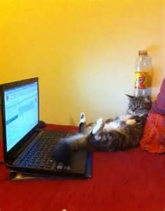 Cat Watching Movie