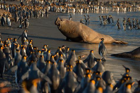 px blog top  wildlife   px