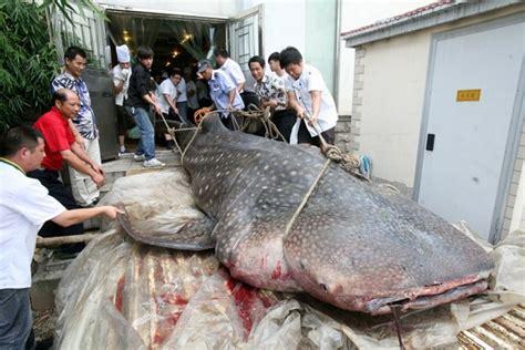 whale shark served  chinese restaurant shark year magazine