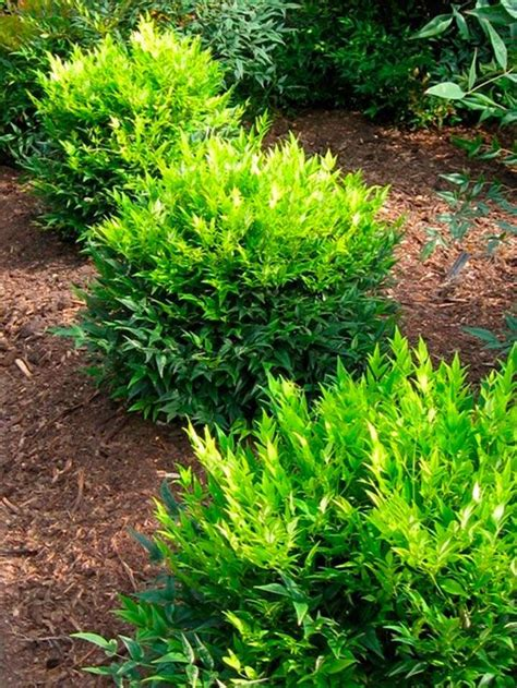 small shrubs for sun top 28 best small shrubs for sun 14 flowering shrubs for sun hgtv 17 best images about
