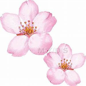 clip+art+of+cherry+blossoms | Cherry Blossom Clipart ...