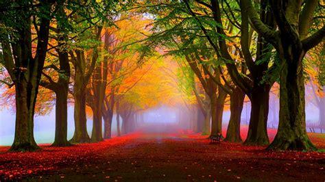 wallpaper autumn fall tress fog foliage  nature