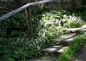 Stauden Für Halbschatten : bodendecker pflanzen worauf kommt es an praktische tipps ~ Frokenaadalensverden.com Haus und Dekorationen