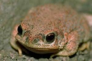 Frog Facts
