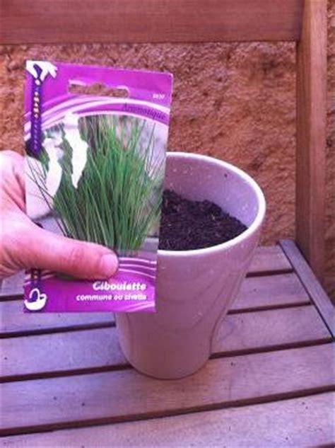 faire pousser de la ciboulette en pot