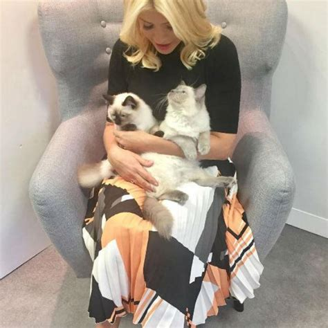 holly willoughbys cat pees  sofa