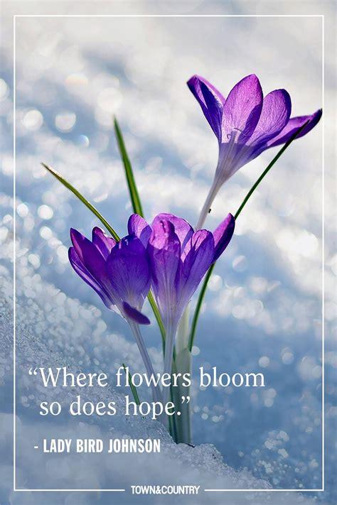 quotes  spring  hope harryandrewmillercom