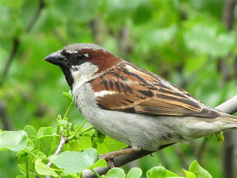 in praise of sparrows poet kate hutchinson