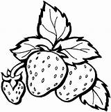 Coloring Strawberry Pages Strawberries Clip Printable Getcoloringpages Fruits sketch template