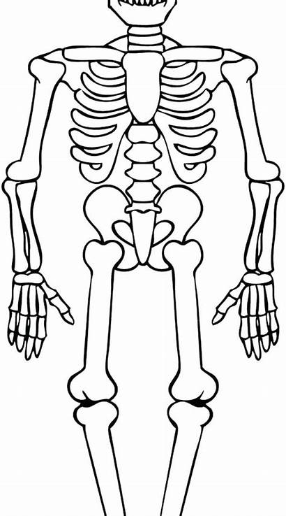 Skeleton Coloring Pages Human Bone Pa Pirate