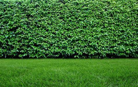 Sichtschutz Garten Durch Pflanzen by Sichtschutz Grundst 252 Cksabgrenzung Und Co Durch Z 228 Une