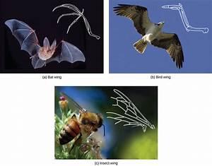 Determining Evolutionary Relationships | Boundless Biology