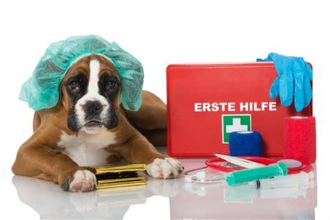 hunde op versicherung vergleich ab  mtl
