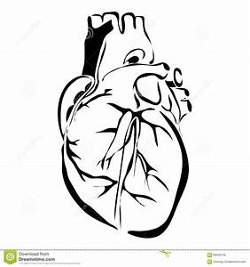 Human Heart Outline Vector | www.pixshark.com - Images ...