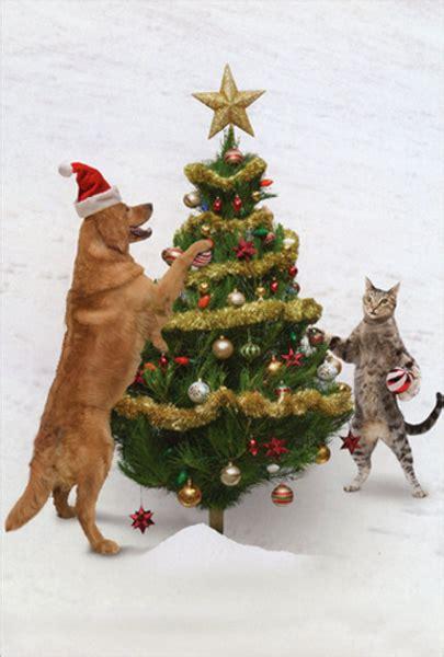 animal antics dog  cat decorating tree humorous funny