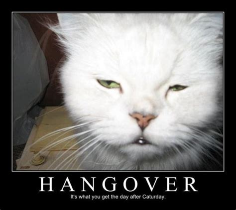 Funny Hangover Memes - hungover cat meme www imgkid com the image kid has it