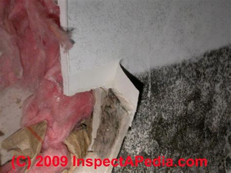mold  drywall mold  sheetrock   find  test