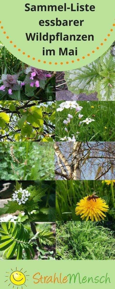 Garten Pflanzen Essbar by Sammel Liste Essbare Wildpflanzen Mai Wildkr 228 Uter