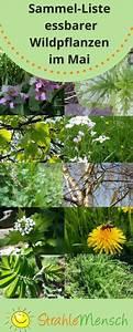 Pflanzen Im Mai : sammel liste essbare wildpflanzen mai wildkr uter essbare blumen kr uter pflanzen und ~ Buech-reservation.com Haus und Dekorationen