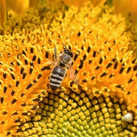 verbotene mittel gegen maulwurf tabelle unterschied wespen bienen hornissen erkl 228 rt