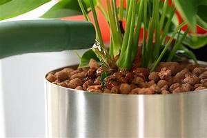 Gummibaum Verliert Blätter : hydrokultur pflanzenfreude im b ro blumen v gele ~ Lizthompson.info Haus und Dekorationen