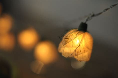 flower leaf string light patio