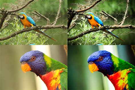 We have created some of the best free lightroom cc presets. Free Nature Color Enhance Lightroom Preset by seelvieh on ...